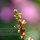 righteousness and praise will spring forth by WalnutHill