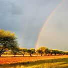 A DOUBLE RAINBOW AFTER THE FIRST RAIN! von Magriet Meintjes