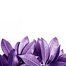 Epic Purple Long Vine Leaves Abstract Minimalist Plant by Shelly Still