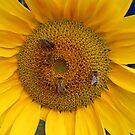 Vier Bienen von LarryWintersohn