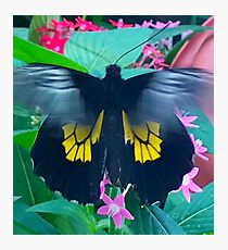 """Fluttering Beauty"", Photo / Digital Painting Photographic Print"