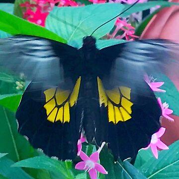 """Fluttering Beauty"", Photo / Digital Painting by KJACDesigns"