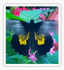 """Fluttering Beauty"", Photo / Digital Painting Sticker"