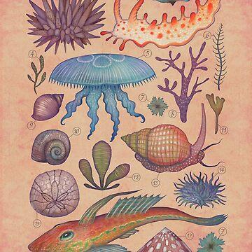 Marine Life II by vladimirsart