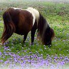 Texas Pony by Vaengi