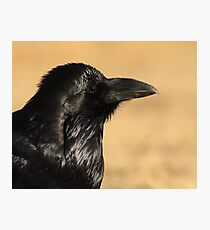 Sunset Raven Photographic Print