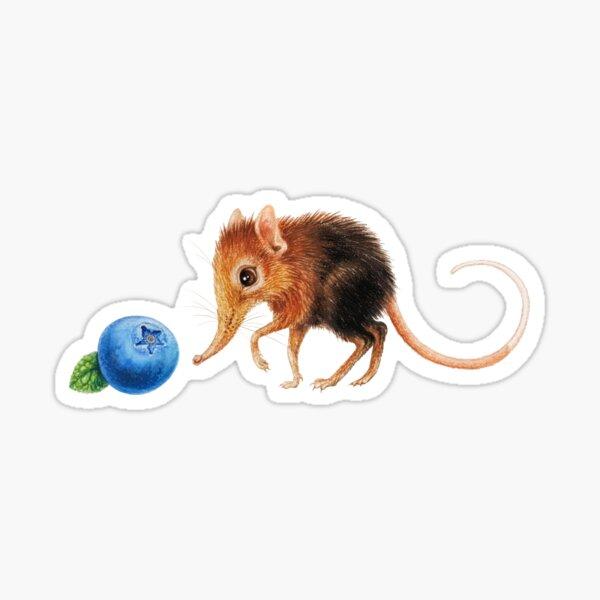 Elephant shrew by Maria Tiqwah Sticker