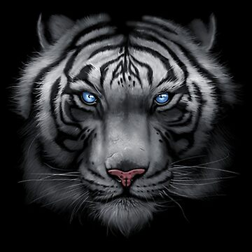 White Tiger with Blue Eyes Face by kleynard