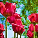Red Tulips by Brian Gaynor