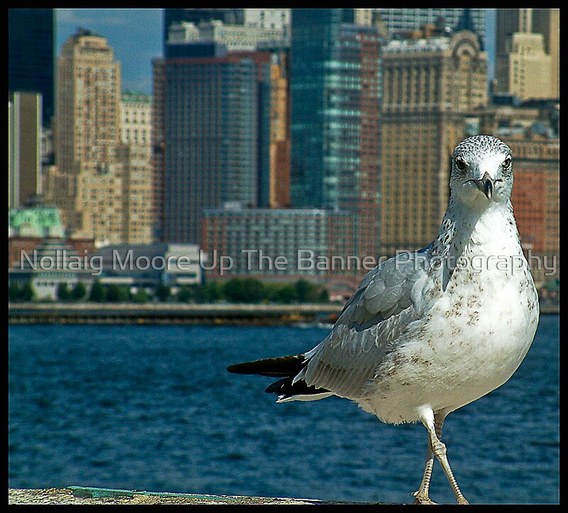 nyc bird watching by Noel Moore Up The Banner Photography