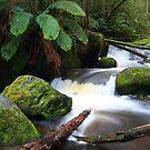 rainforest freshness by Tony Middleton