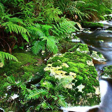 ...green scene by phillip24