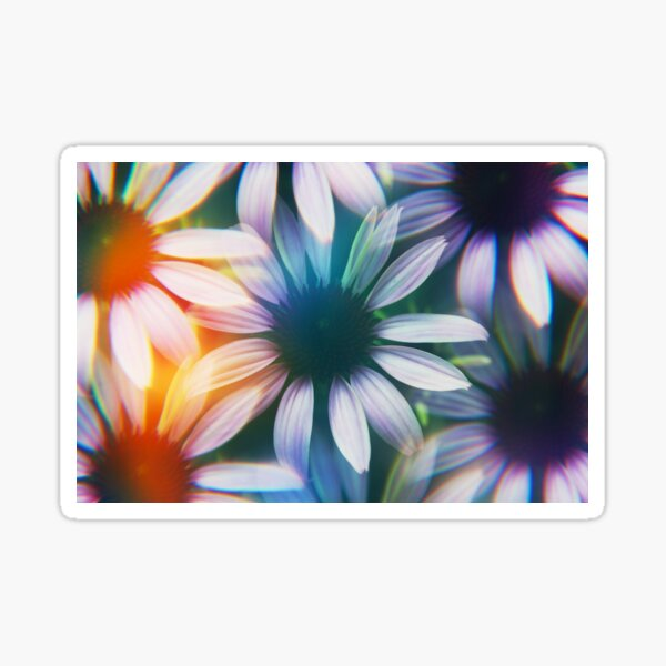 Echinacea photographed through prism filter Sticker