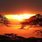 Serengeti sunset by Paul Plunkett
