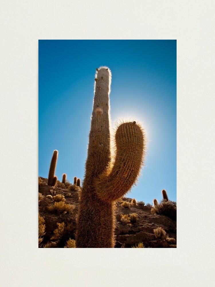 Alternate view of Cactus Photographic Print