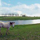 Kentucky Farmland by AcadianaGal