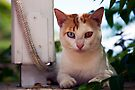 Cats eyes by Paul Thompson Photography