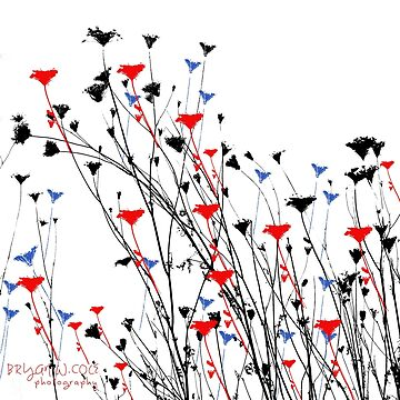 July 4th Wild Flowers by BryanSoCal
