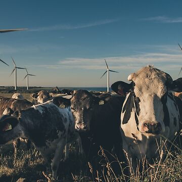 Carnsore Point Wind Farm Cows by shaymurphy