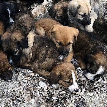 Puppies dogs by GraziaDesigner