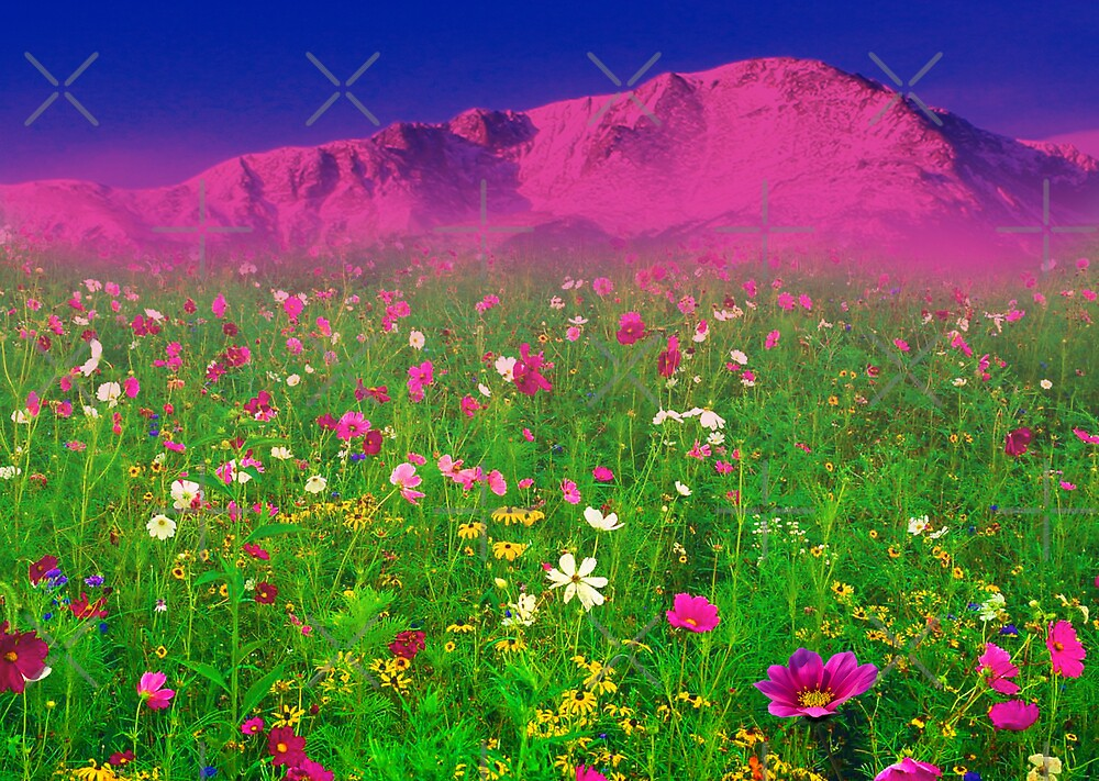 Quot Springtime In The Rockies Quot By Beverlytazangel Redbubble