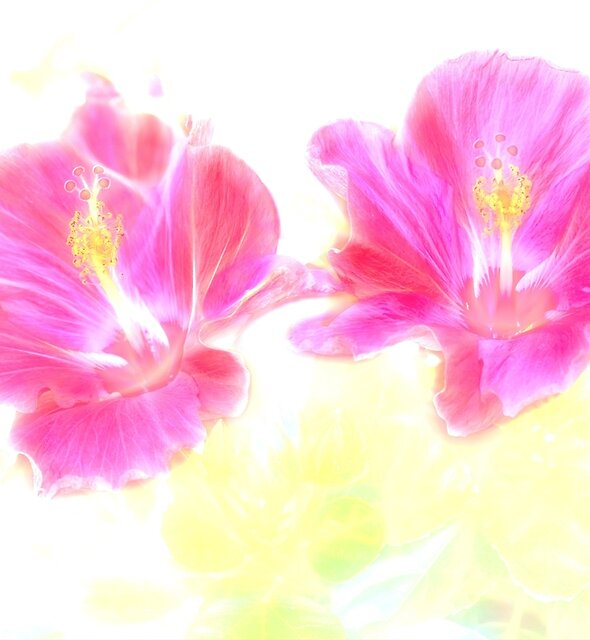 Hibiscus Light by Kay Brewer