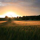 Barley Sunset by Monster
