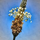 Plantain II by Sheri Nye
