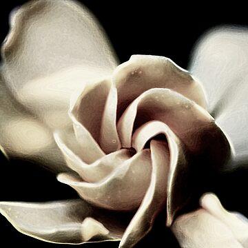 Flower - Gardenia by Evita