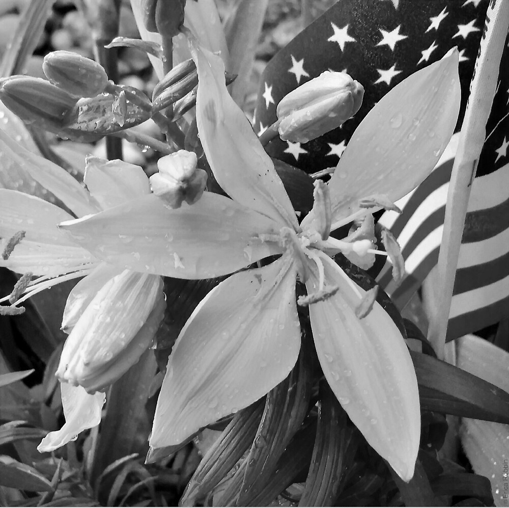 Patriotic Collection B/W WITHOUT Stamp Border by EricaRobbin