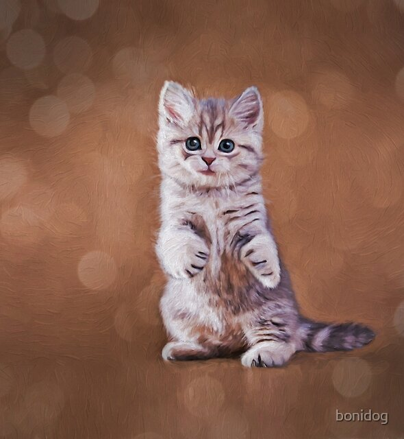 Drawing funny kitten by bonidog