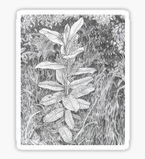 Milkweed Sticker