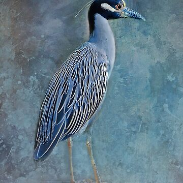 Night Heron Blues by HHPhotographyFL