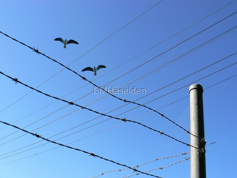 Fly By Wire. by Lynne Haselden