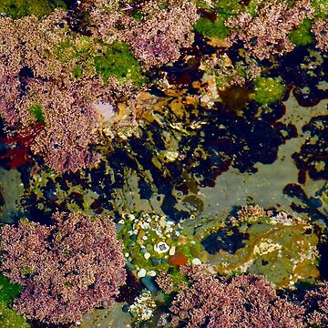 Tide Pool Garden by lenzart