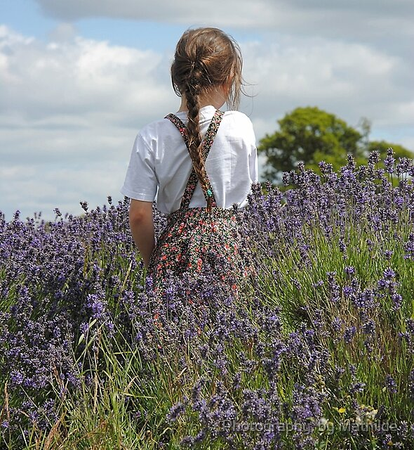 Lavender Blue by Photography  by Mathilde