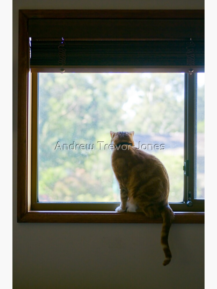 Angus at the Window by andrewtj