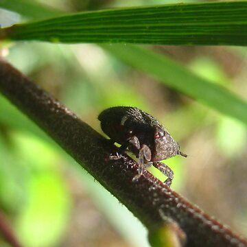 Dardus Treehopper by ravenmadd