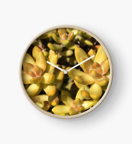 Greens Of A Succulent Clock