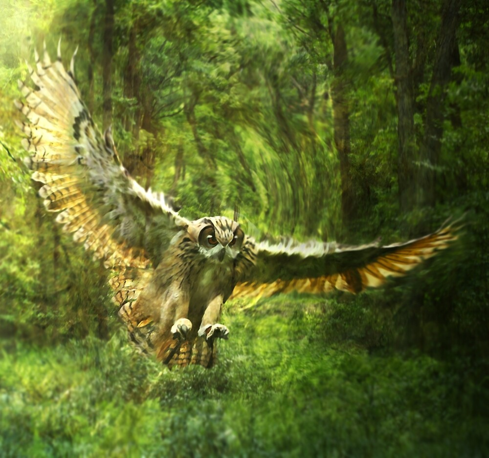 Owl Forest by Cliff Vestergaard