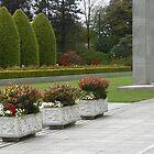 Row of Planters, Preston Temple Forecourt by SunriseRose