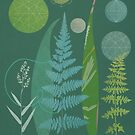 The Fern Garden by Sarah Jarrett