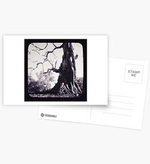 Wildman Postcards