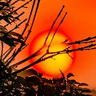 The Sun, that nurtures Life and Death - A View by Carl Gaynor