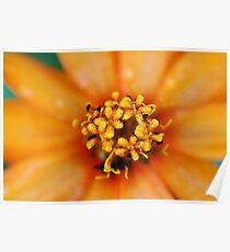 Cheerful Orange Flower Macro Poster