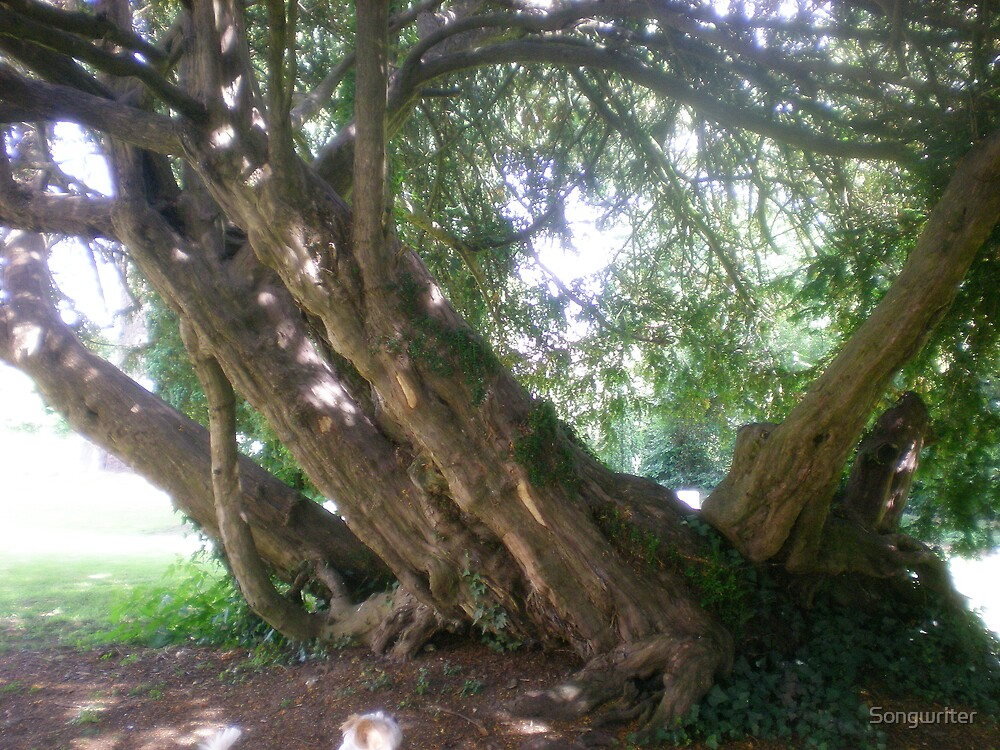 'climbing tree in the churchyard' by Songwriter
