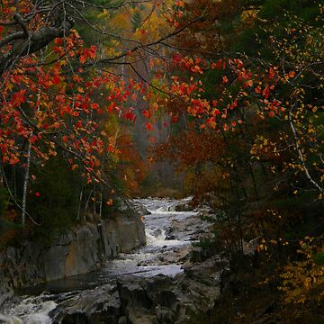 The Beautiful Swift River In Autumn by mainephotobug
