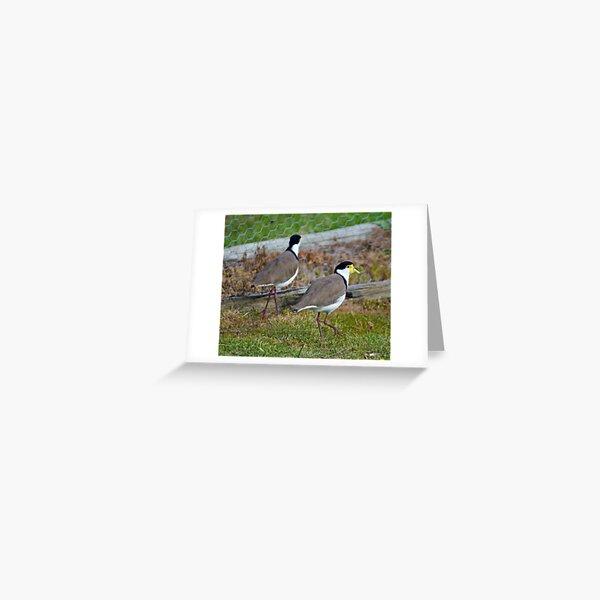 Masked Lapwing Greeting Card