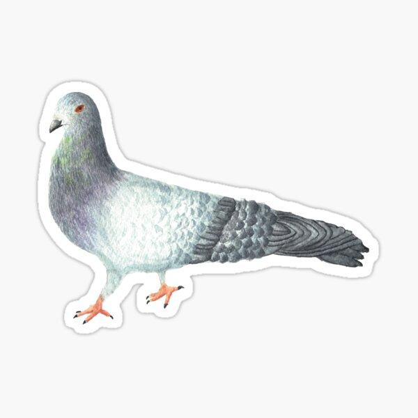 Pete the Pigeon Sticker