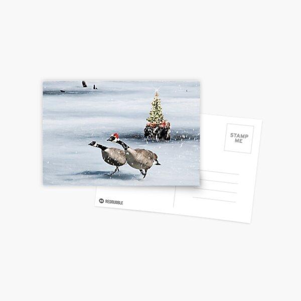 Christmas Geese Postcard